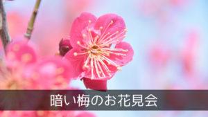 暗い梅のお花見会