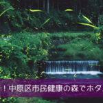 突発企画!中原区市民健康の森でホタル鑑賞会