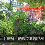 暗い遠足!高幡不動尊で紫陽花を見よう!