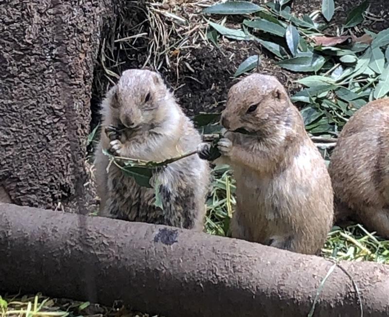上野動物園オフ