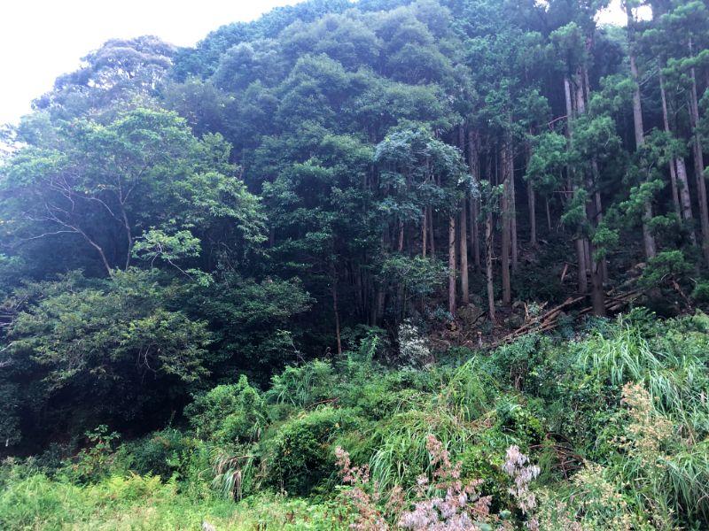 和歌山県上富田町の山林
