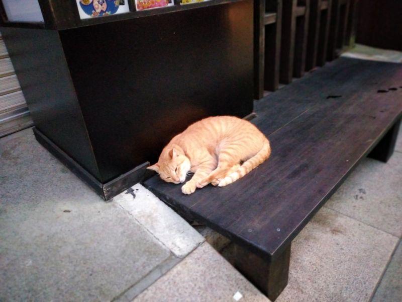 江の島の猫